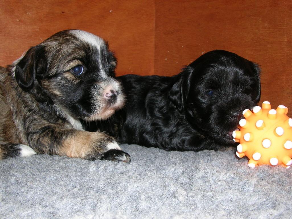 16.11.08 Aniko und Aiko mit ihrem Lieblingsball...