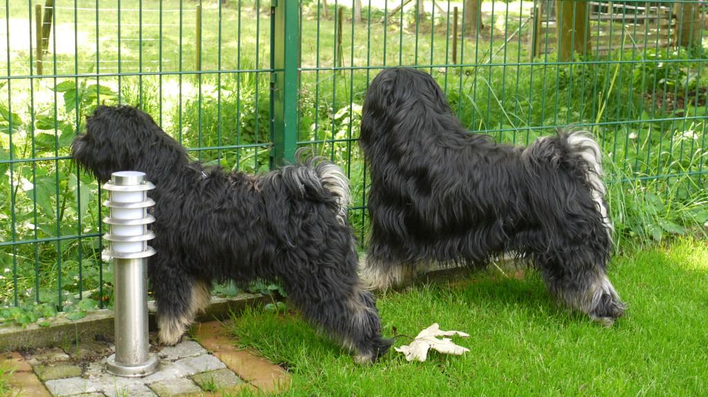 Dusty und Jeff im Garten...  Mai 2009