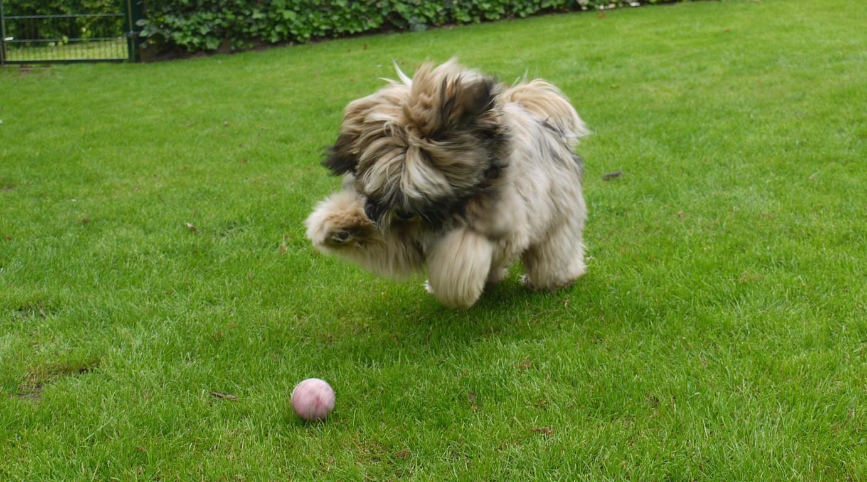 09.05.09 Aiko beim Ballspiel - ist das ein Powerriegel...