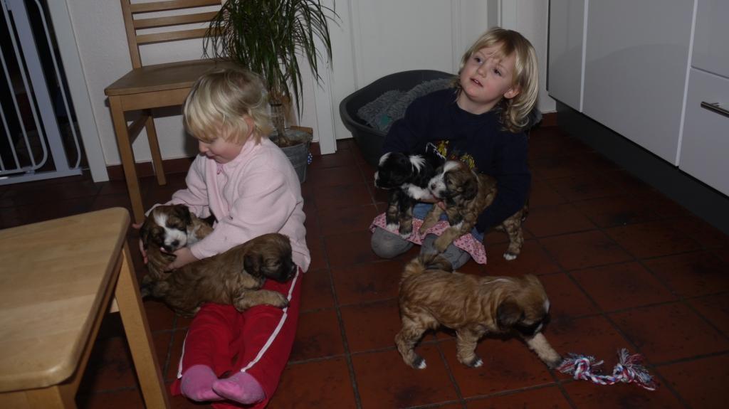 27.12.10 Ilmar und Dana mit allen Welpen...