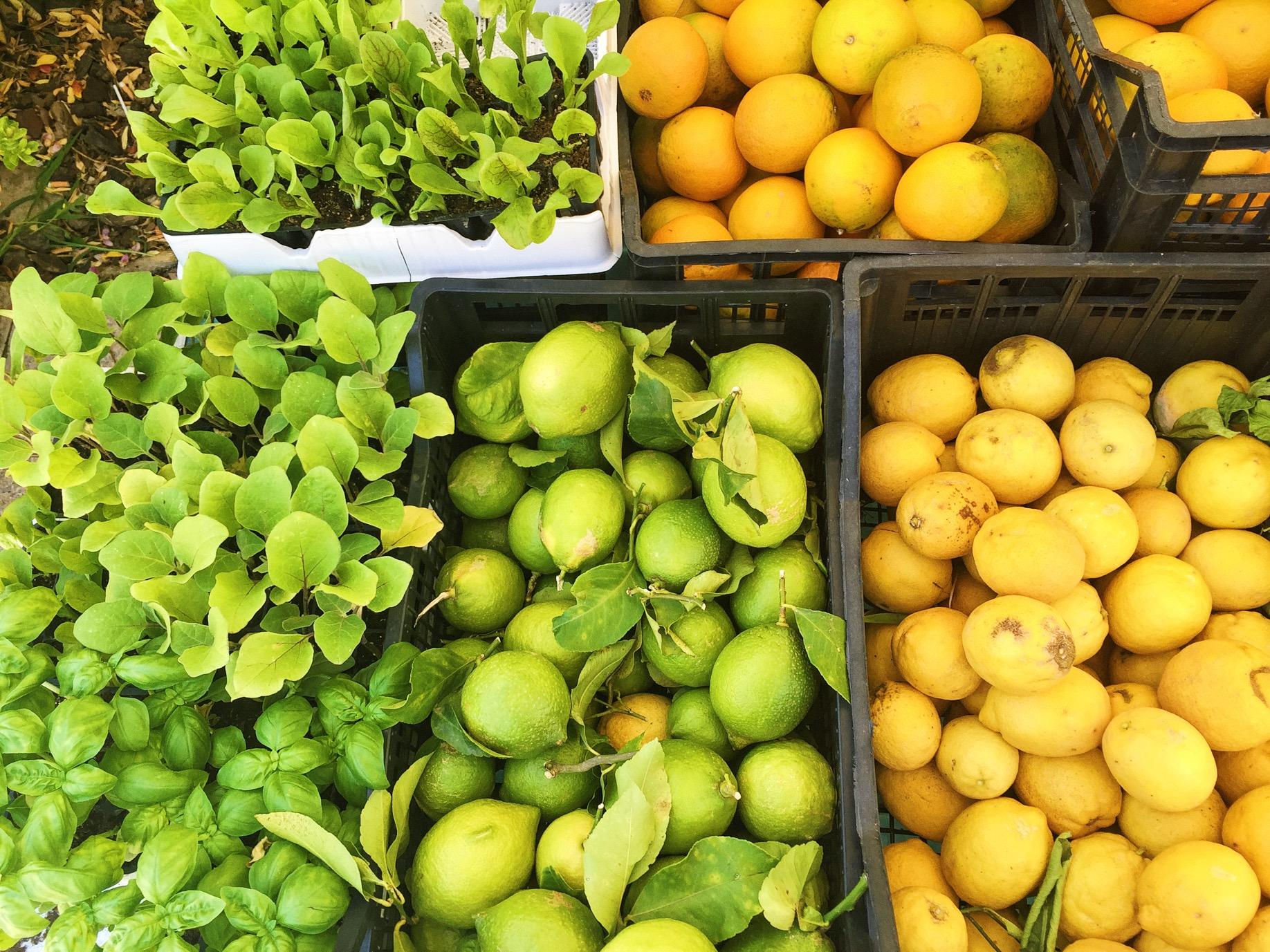 Ein Traum von Obst und Gemüse.