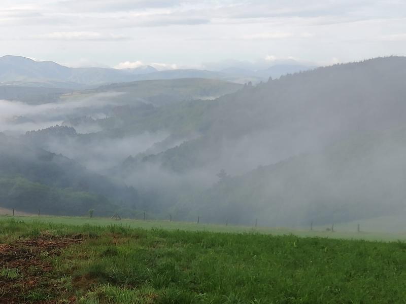 6 Grad und Nebelschwaden