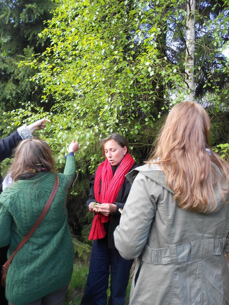 Birkenblätter ernten