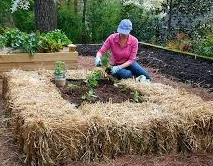 Bale raised bed with room to sit & plant