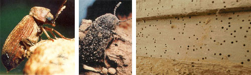 How to spot and treat Woodworm in your home explained here