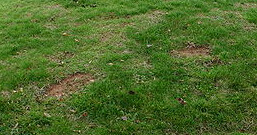 Grass on a Steep slope eroded by footfall