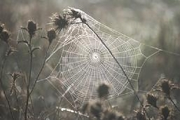 Cobwebs in the Herbaceous border bring a bit of winter interest and colour