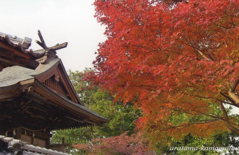 近くの一先宮は桜と紅葉が楽しめる穴場です。