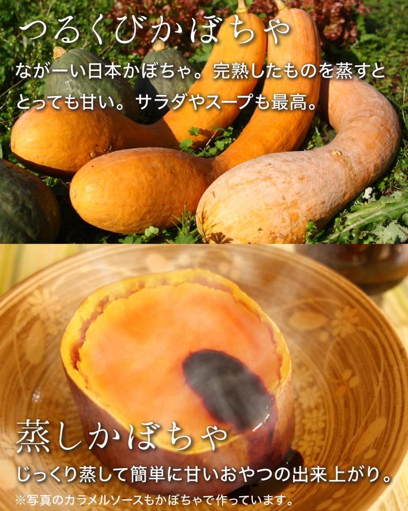 つるくびかぼちゃ:ながーい日本かぼちゃ。完熟したものを蒸すととっても甘い。サラダやスープも最高。蒸しかぼちゃ:じっくり蒸して簡単に甘いおやつの出来上がり。
