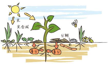 草を刈り敷くことで養分が供給される