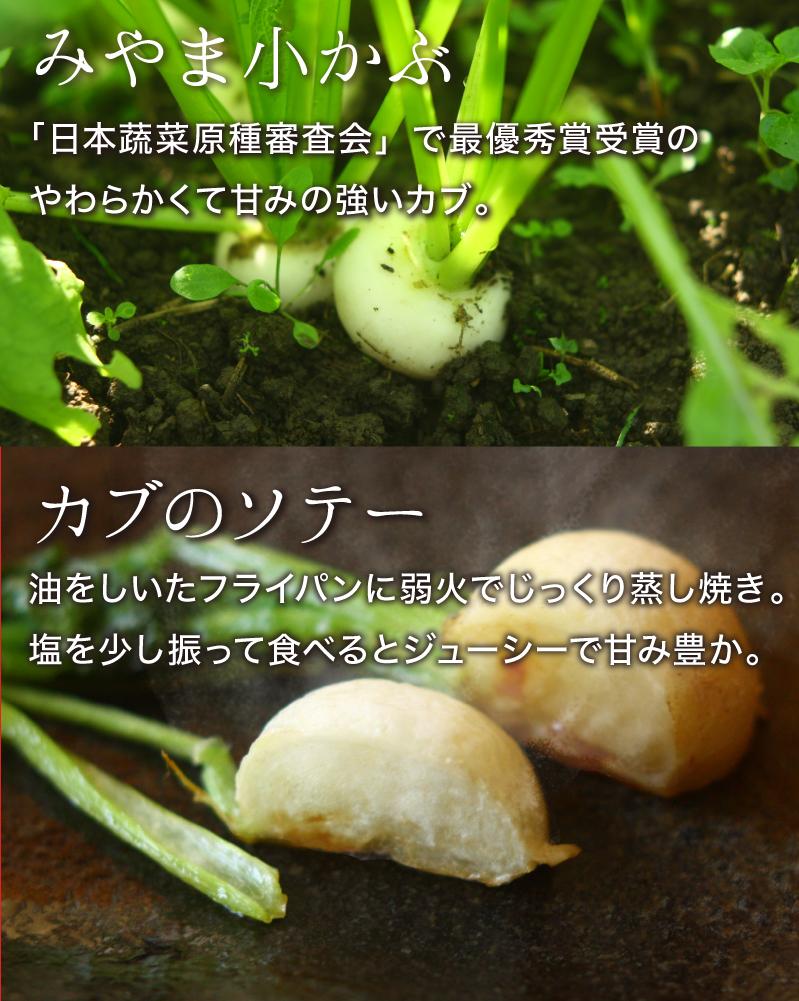 みやま小かぶ:「日本蔬菜原種審査会」で最優秀賞受賞の柔らかくて甘みの強いカブ。カブのソテー:油をしいたフライパンに弱火でじっくり蒸し焼き。塩を少し振って食べるとジューシーで甘み豊か。