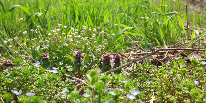 草の生えた畑の画像
