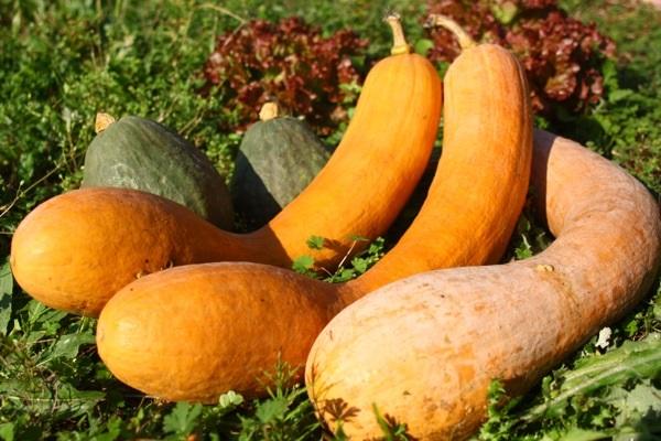 自然栽培野菜の通販【ののま自然農園】は、おすすめの旬な野菜をお届け