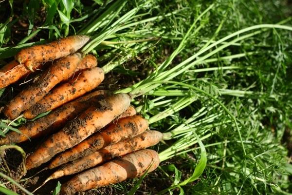 自然農の野菜を購入するなら【ののま自然農園】の通販!