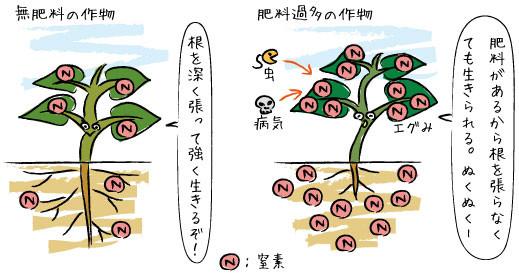 無肥料の作物と肥料過多の作物の違いイメージ