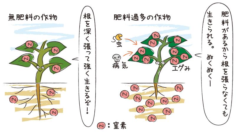 肥料過多の野菜は根を張らない。無肥料の野菜は根を深く張って強く生きる。