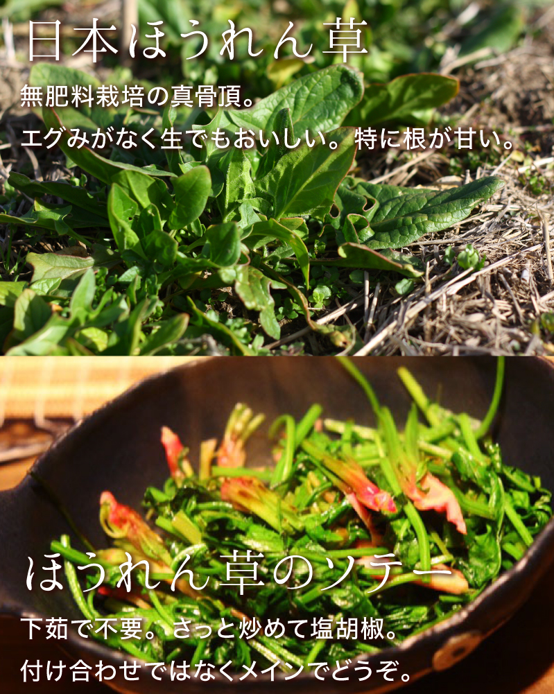 日本ほうれん草:無肥料栽培の真骨頂。エグみがなく生でも美味しい。特に根が甘い。ほうれん草のソテー:下茹で不要。さっと炒めて塩胡椒。付け合わせではなくメインでどうぞ。