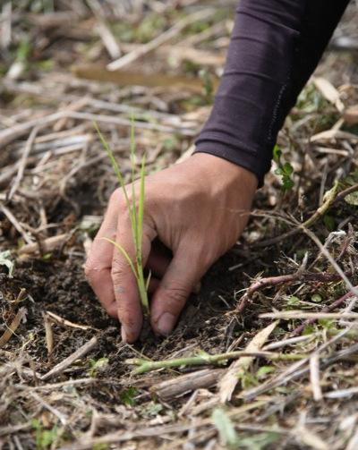 通販で無農薬野菜を購入するなら、自然農に興味がある方におすすめの【ののま自然農園】
