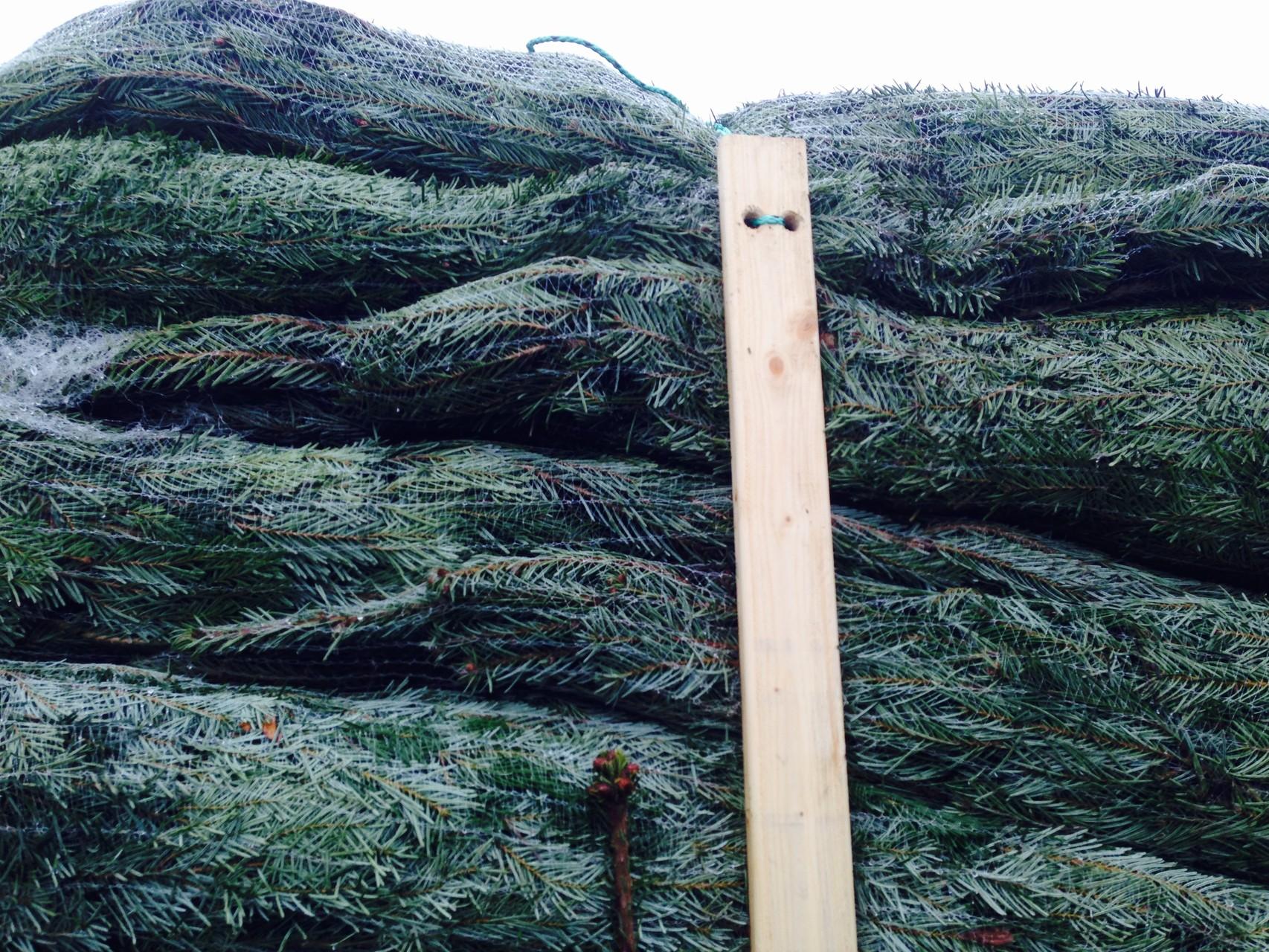 Sicher Genetzte Weihnachtsbäume