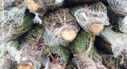 Weihnachtsbäume Bayern präsentiert frisch geschlagene Nordmanntannen ab Hof