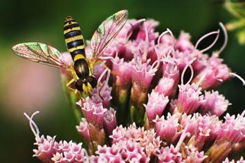 Natuur inventarisatie fauna en flora