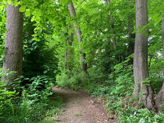 Wald Im Grünen Erholung Urlaub Natur naturnah gesunde Luft beste Luft Wohnen Wohnung mieten vermieten kaufen