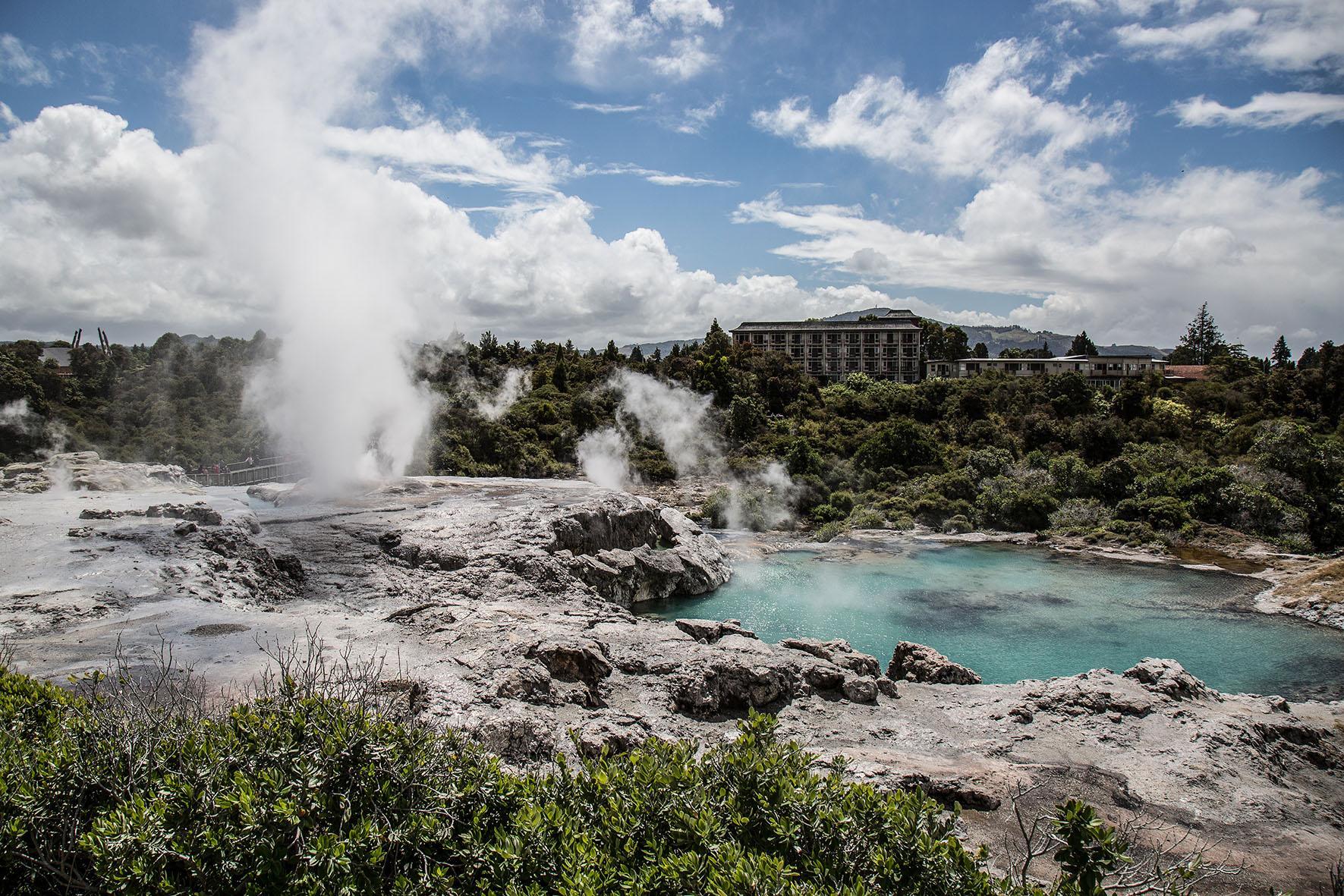 Geysir, Te Puia Rotorua