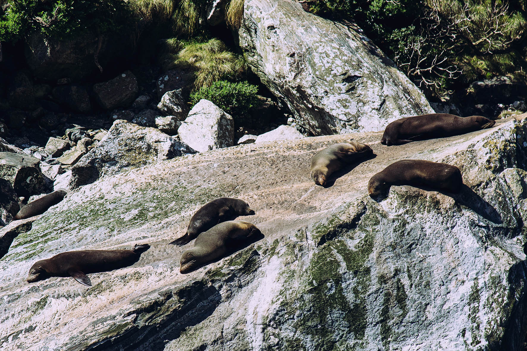 Seals - Milford Sound