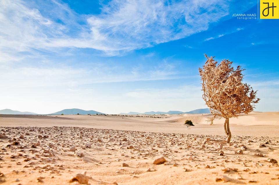 Spanien, Fuerteventura - © JOANNA HAAG