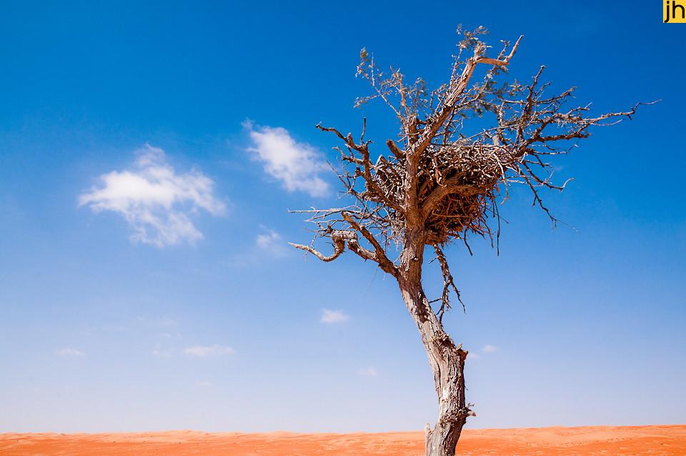 Oman - © JOANNA HAAG