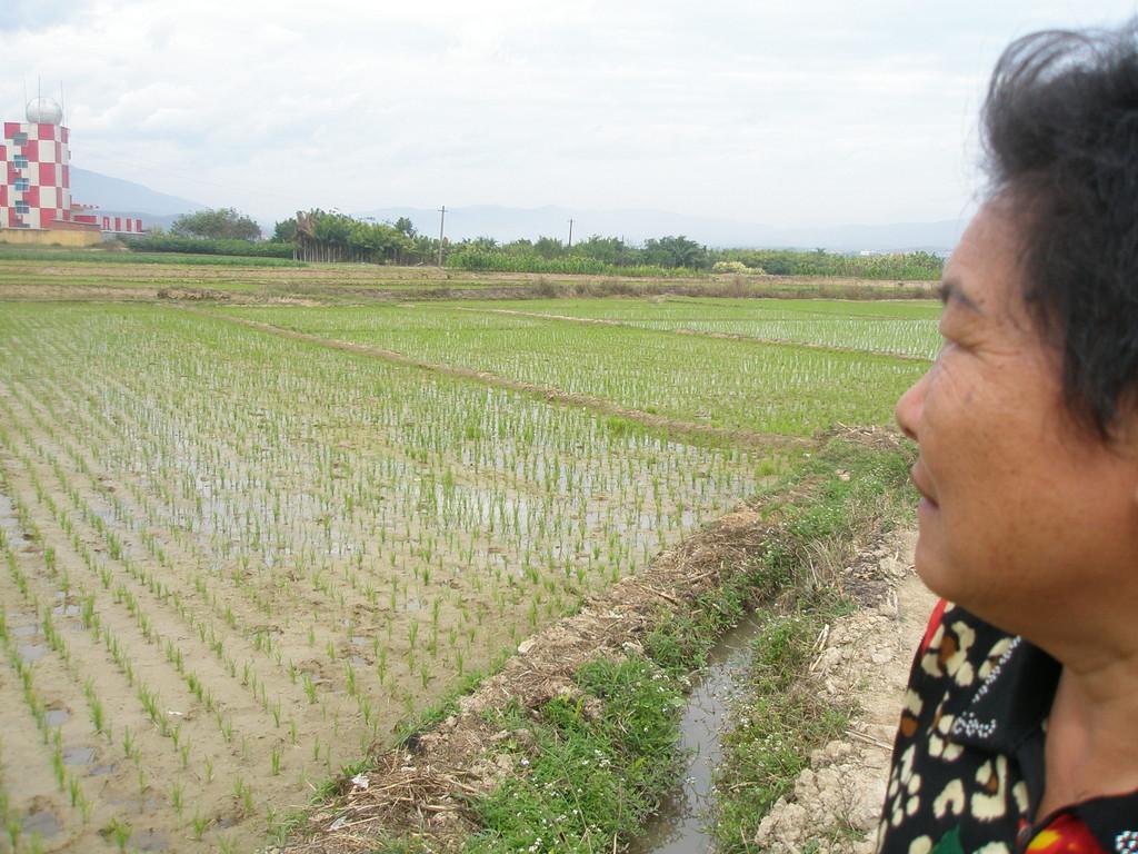 雲南ではお米は年2回とれます。日本ではあり得ない12月の田植えの田んぼです。