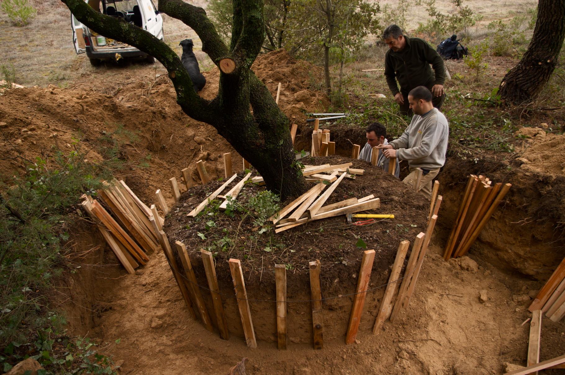 Construction d'un bac en chêne