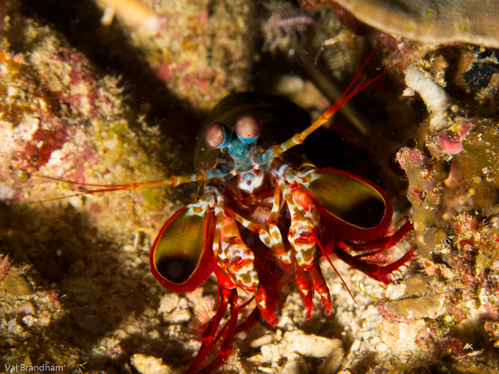 Mantis Shrimp and North Rock