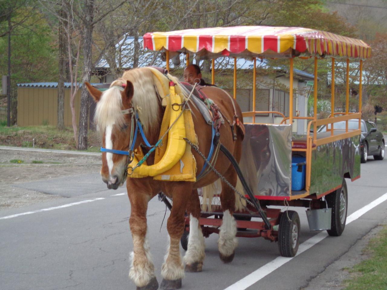 松戸みのり台カイロプラクティック,整体院ブログ(榛名湖の馬)