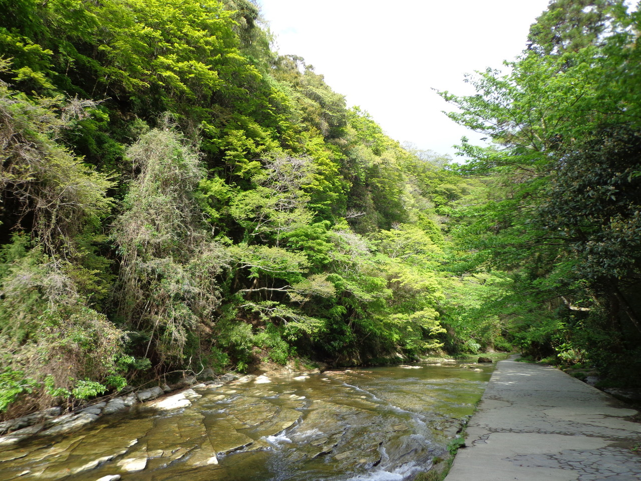 松戸みのり台カイロプラクティック,整体院ブログ(粟又の滝遊歩道)