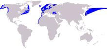 Verbreitung von Schweinswalen (blaue Gebiete) - Quelle: Wikipedia.de