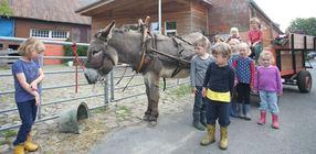 Der hofeigene Esel zieht den Kutschwagen, mit dem die Jungen und Mädchen vom Bauernhofkindergarten Aschwarden regelmäßig Ausflüge zur Marschenwiese unternehmen. (Christian Kosak)