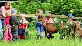 Der tägliche Umgang mit Tieren gehört zum pädagogischen Konzept des Bauernhof-Kindergartens. Die Einrichtung in Aschwarden möchte als Integrationskita anerkannt werden. GKE· (Kosak)