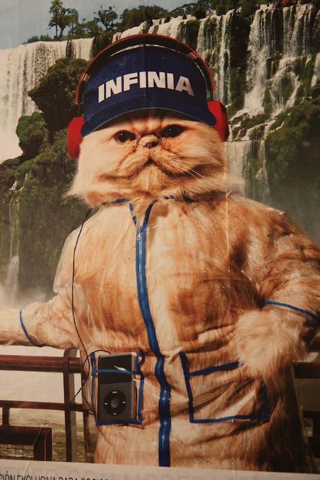 Werbebild mit Katze I