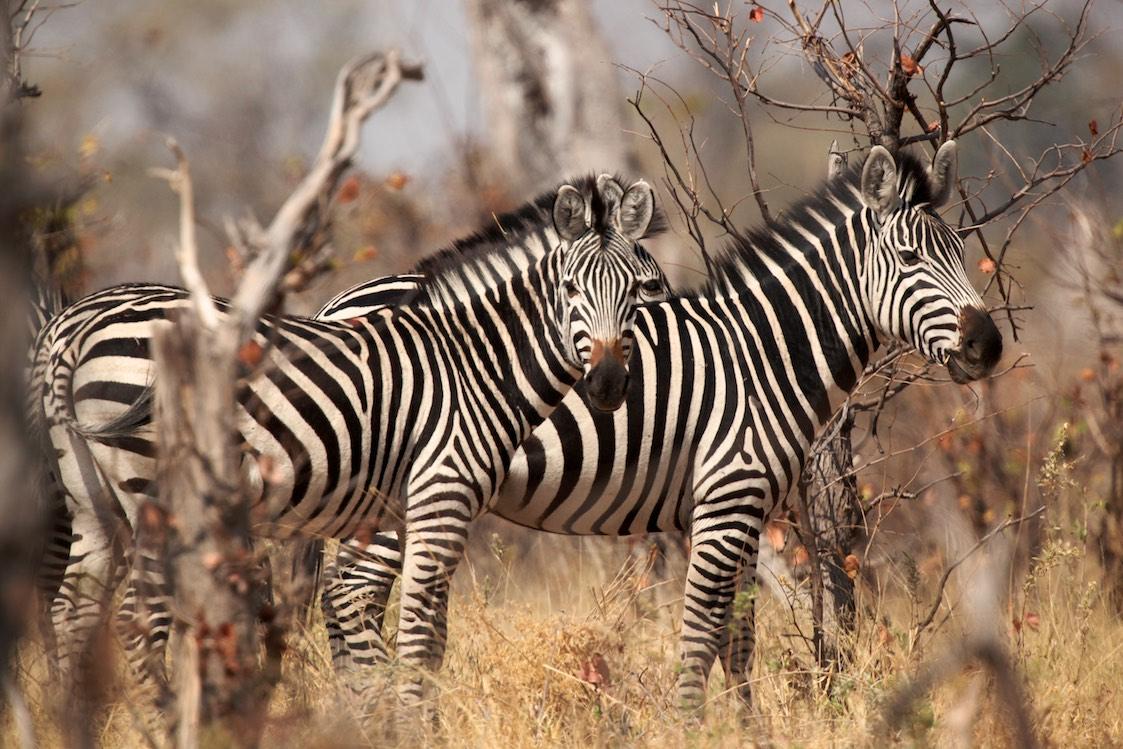 namibia botswana zimbabwe sambia 2012 thegreyhoundsontours