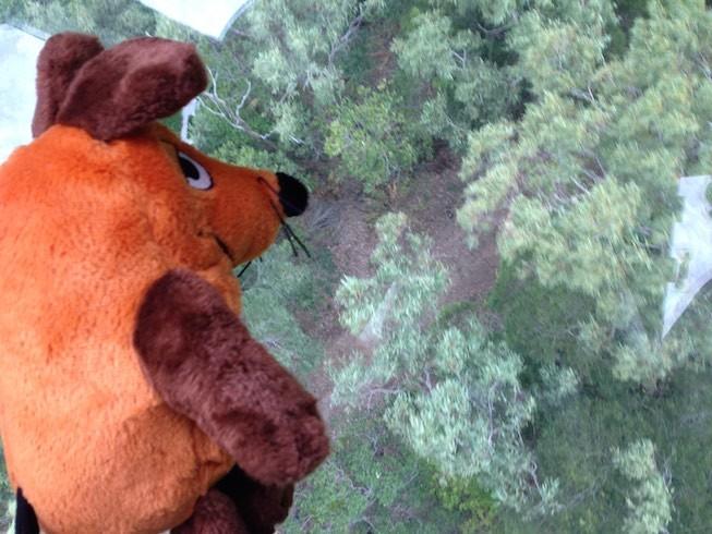 """Maus """"fliegt"""" über den Regenwald."""