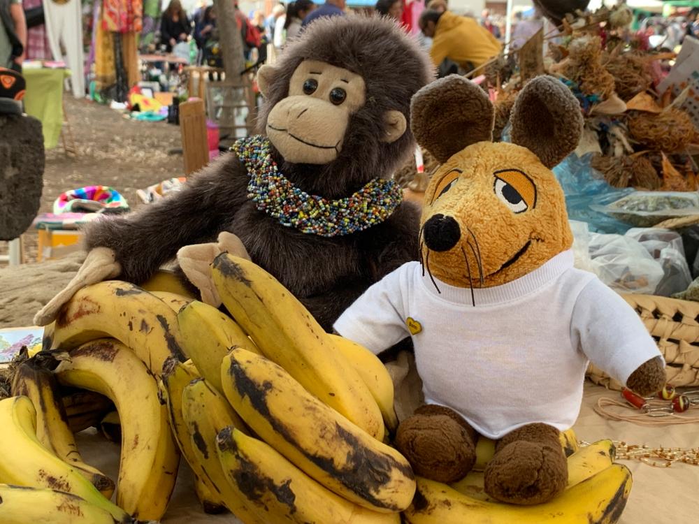 Die Bananen von La Palma sehen zwar optisch nicht besonders aus, schmecken aber wunderbar. Kein Wunder, dass Maus die Gelegenheit sofort nutzte und sich stärkte.