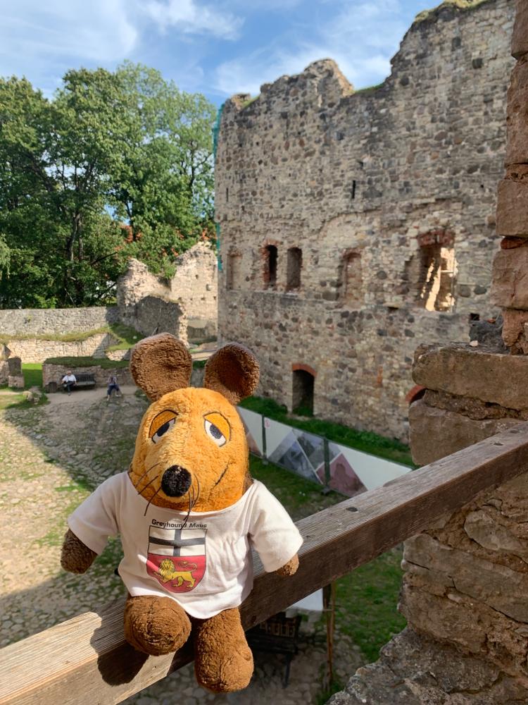 Burgführer Maus erklärt die Ruine