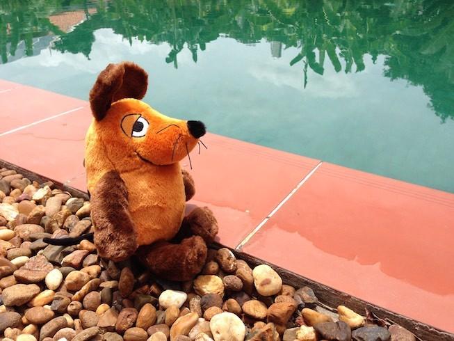 Maus wäre am liebsten in den Pool gehüpft, aber für alle, die nicht Hotelgäste sind, kostet das Vergnügen 5 Dollar. Das war ihr dann doch zu viel !