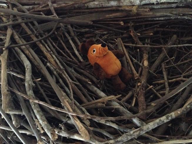 Maus landete auf ihrer Flucht vor den Adlern aus Versehen im Adlerhorst.