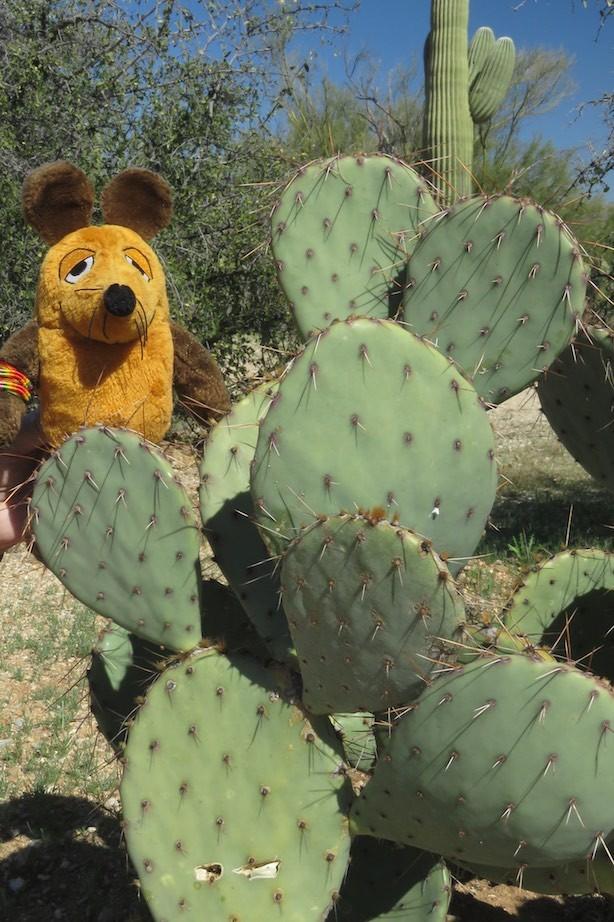 Wer hat die schönsten Ohren in Arizona - Maus oder Kaktus ?