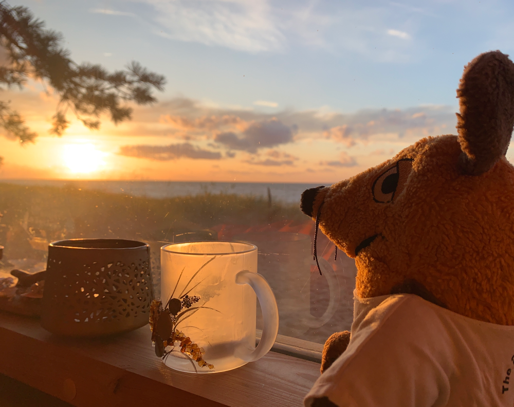 Maus wartet während unserer Abwesenheit auf den Sonnenuntergang
