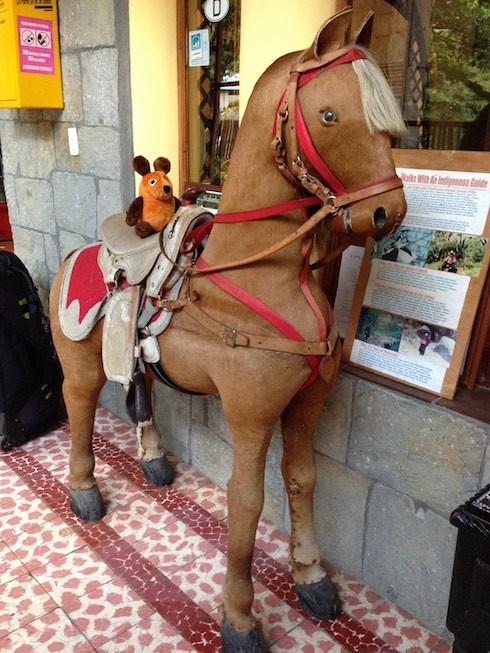 Gaucho Maus ist bereit für den Ritt nach Cuenca