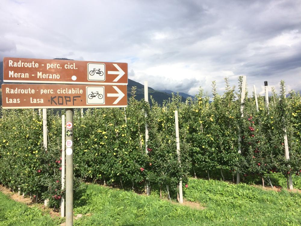 Je weiter wir vorwärts kommen, umso mehr Apfelplantagen liegen links und rechts des Weges