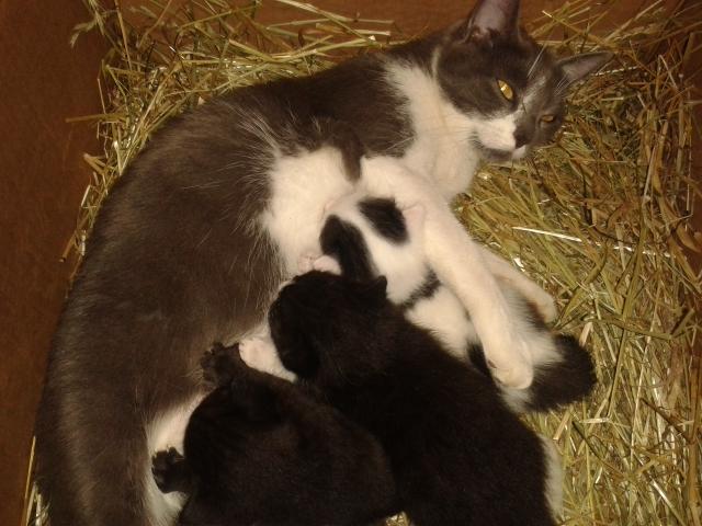 Mimi mit ihren 3 Katzenbabys im Sommer 2016